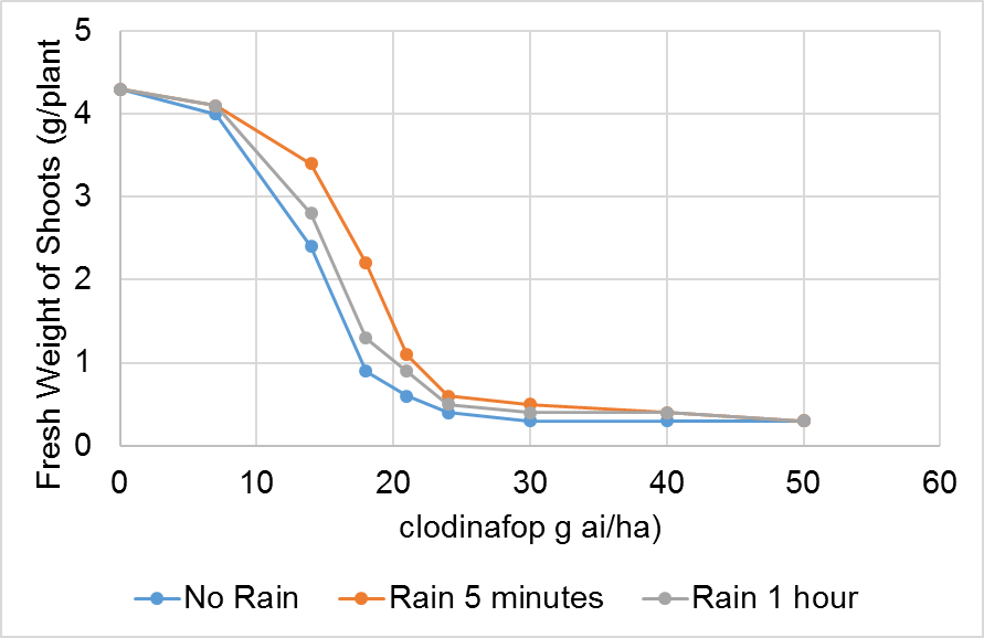 Figure 3. Effect of rain and application rate on the fresh weight of oats sprayed with clodinafop applied with adjuvant.