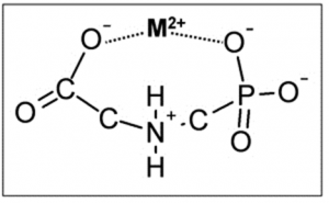 Figure 1.  A metal ion (designated M2+), such as calcium, binds to two negative charges on a glyphosate molecule (Courtesy of the University of Nebraska – Lincoln).